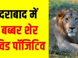 हैदराबाद में 8 बब्बर शेर कोविड पॉजिटिव