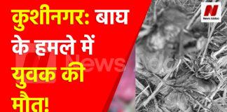 कुशीनगर: बाघ के हमले में युवक की मौत
