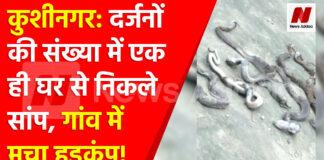 कुशीनगर: दर्जनों की संख्या में एक ही घर से निकले सांप,गांव में मचा हड़कंप