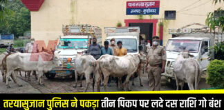 Teryasujan police caught three pickups carrying ten amount cows, two accused arrested