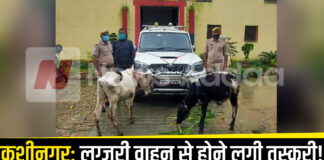 Kushinagar: Due to the activation of the police, the cow bansh smugglers changed the way of smuggling