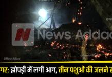 Kushinagar: Hut caught fire, three animals died due to burns!